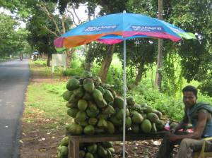 A typical fresh coconut-selling joint